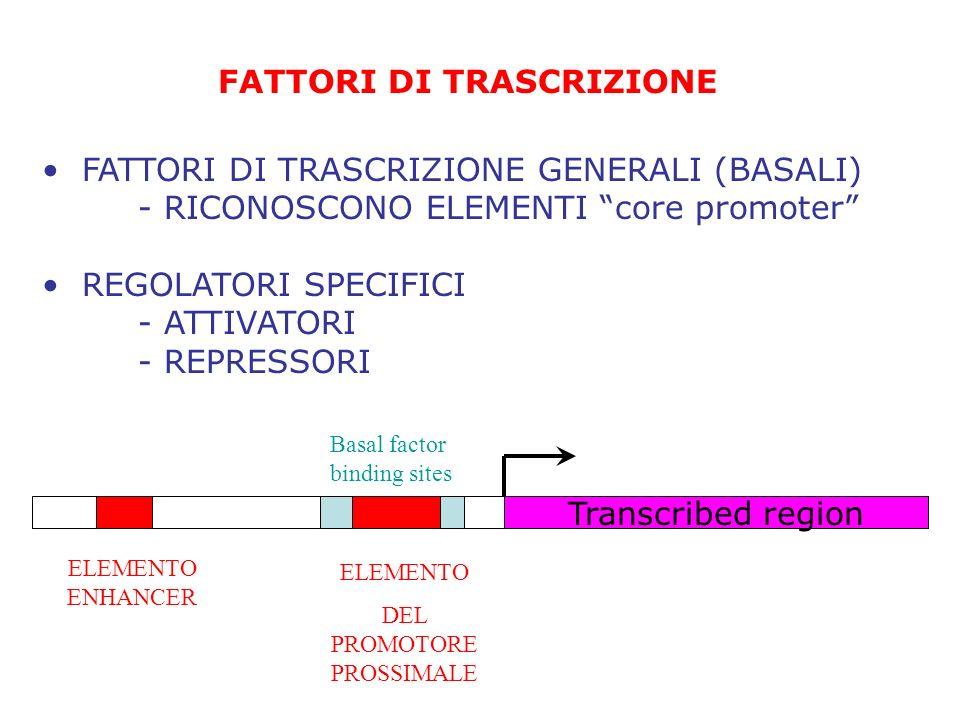 FATTORI DI TRASCRIZIONE FATTORI DI TRASCRIZIONE GENERALI (BASALI) - RICONOSCONO ELEMENTI core promoter REGOLATORI SPECIFICI - ATTIVATORI - REPRESSORI