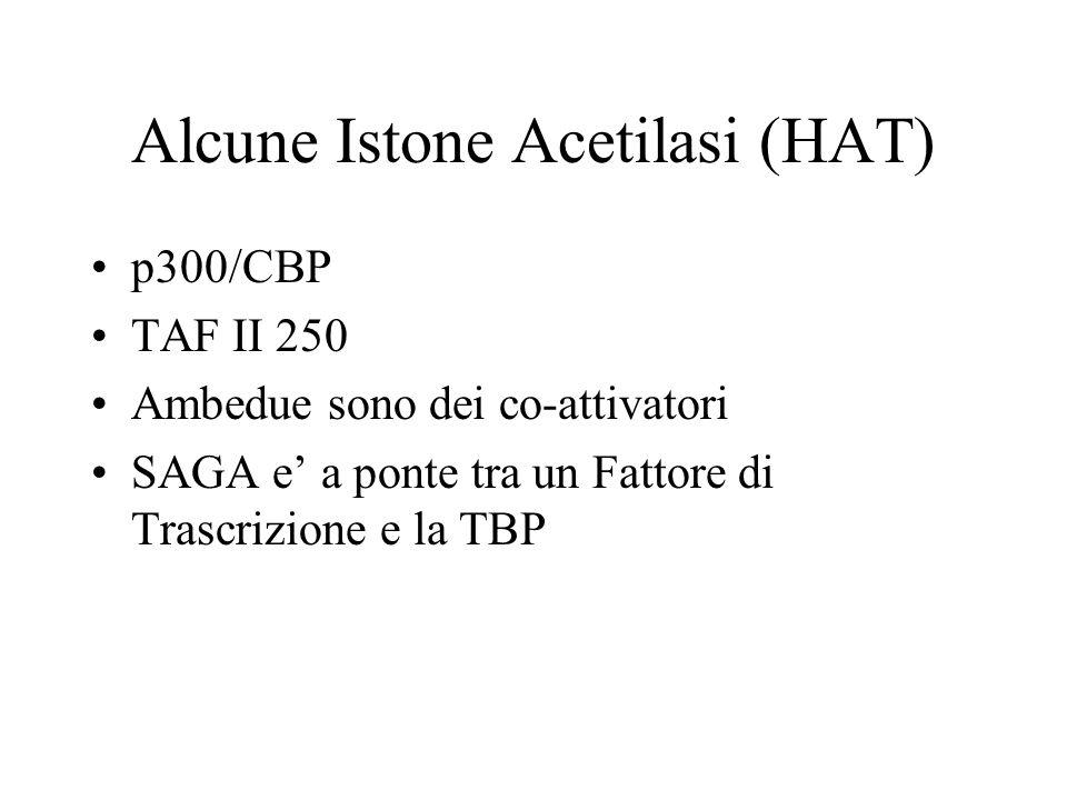 Alcune Istone Acetilasi (HAT) p300/CBP TAF II 250 Ambedue sono dei co-attivatori SAGA e a ponte tra un Fattore di Trascrizione e la TBP
