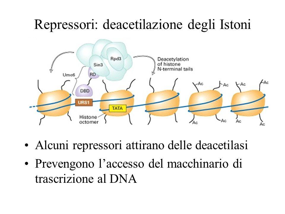 Repressori: deacetilazione degli Istoni Alcuni repressori attirano delle deacetilasi Prevengono laccesso del macchinario di trascrizione al DNA