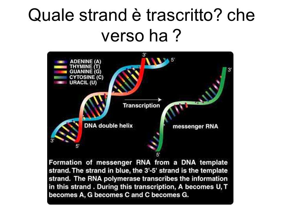 Rna polimerasi II
