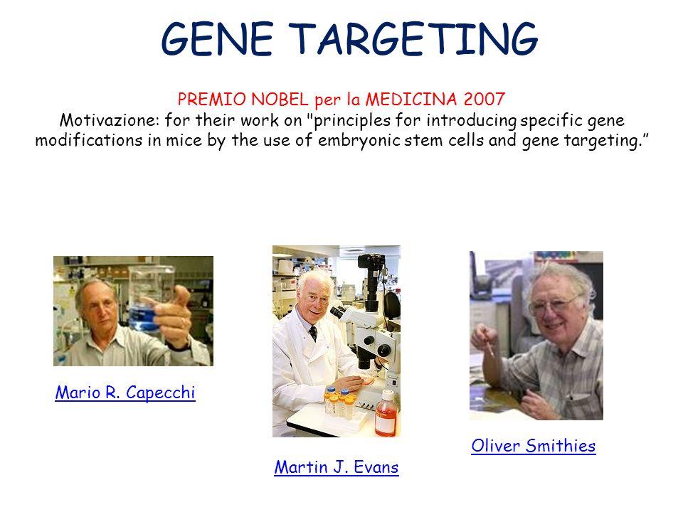 GENE TARGETING Mutagenesi MIRATA mediante ricombinazione omologa in cellule ES Permette la creazione di una mutazione in un gene PREDETERMINATO Questa mutagenesi può avere come risultato: 1)INATTIVAZIONE dellespressione di un gene (KNOCK-OUT) 2)DIMINUZIONE dellespressione di un gene (KNOCK-DOWN) 3)INSERZIONE di un gene difettivo/selvatico (correzione) (KNOCK-IN) IL GENE TARGETING SFRUTTA LA RICOMBINAZIONE OMOLOGA