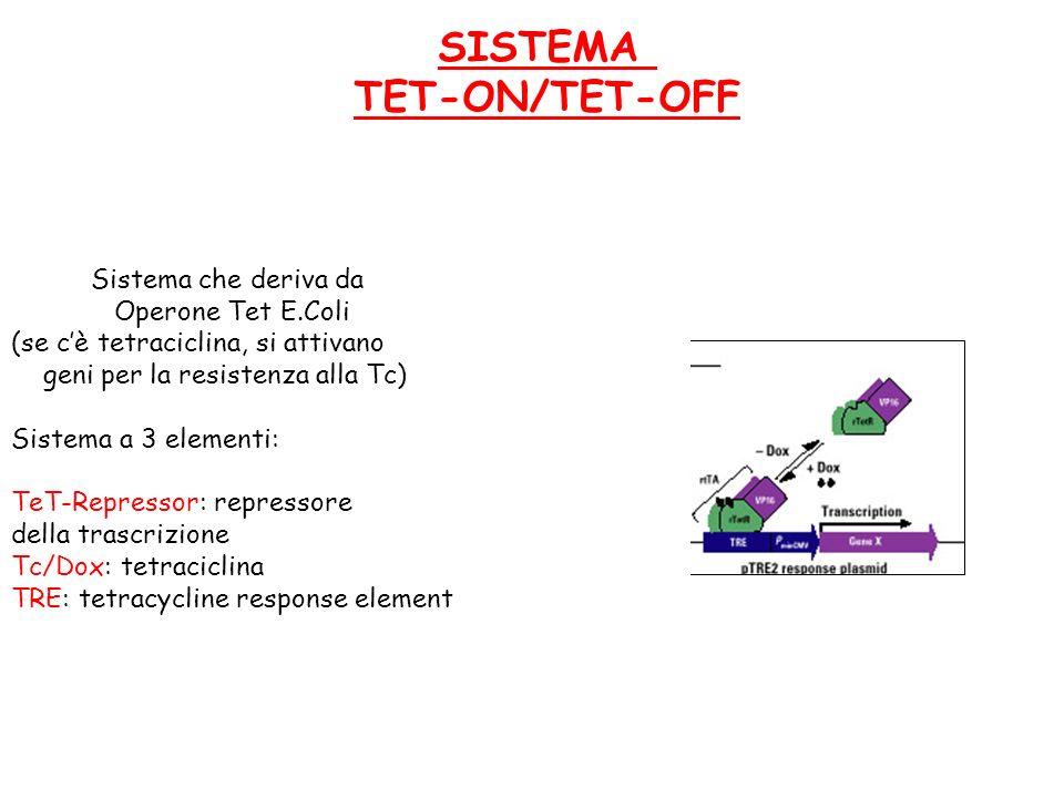 SISTEMA TET-ON/TET-OFF Sistema che deriva da Operone Tet E.Coli (se cè tetraciclina, si attivano geni per la resistenza alla Tc) Sistema a 3 elementi:
