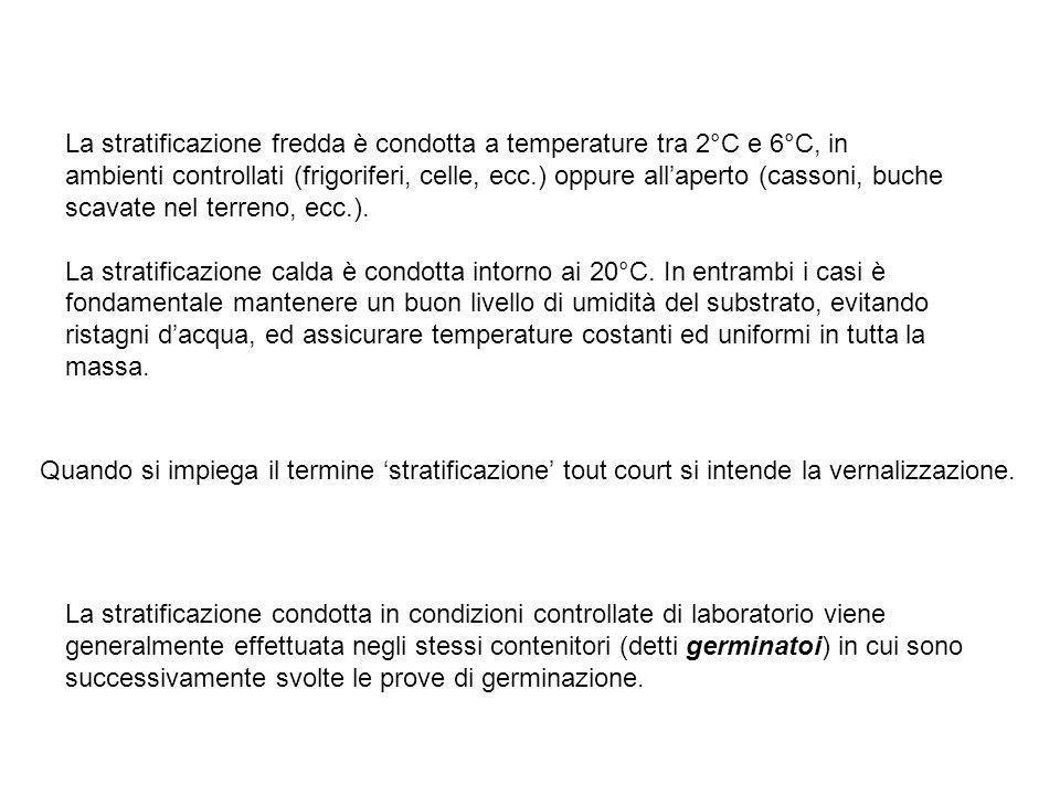 La stratificazione fredda è condotta a temperature tra 2°C e 6°C, in ambienti controllati (frigoriferi, celle, ecc.) oppure allaperto (cassoni, buche