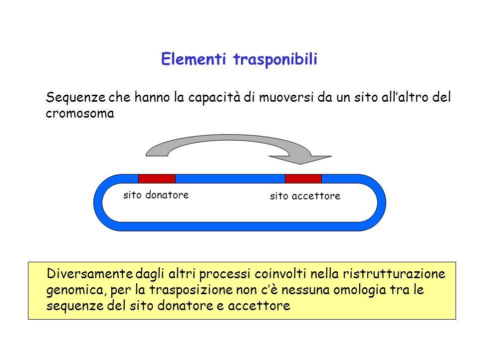 Elementi trasponibili Sequenze che hanno la capacità di muoversi da un sito allaltro del cromosoma Diversamente dagli altri processi coinvolti nella r