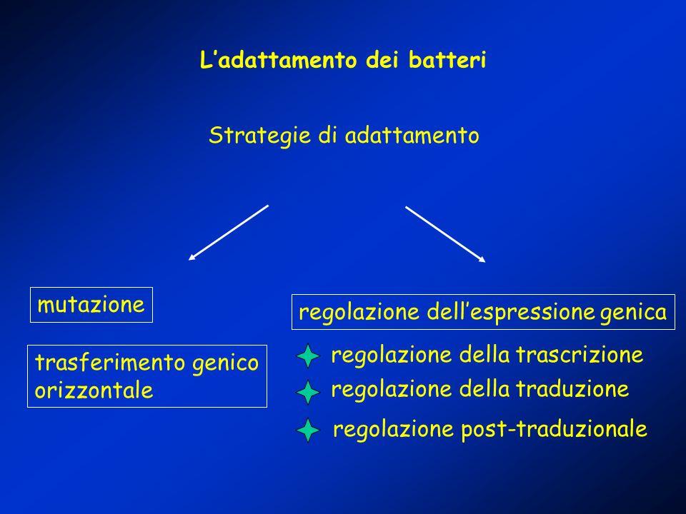 Ladattamento dei batteri Strategie di adattamento mutazione regolazione dellespressione genica regolazione della trascrizione regolazione della traduz