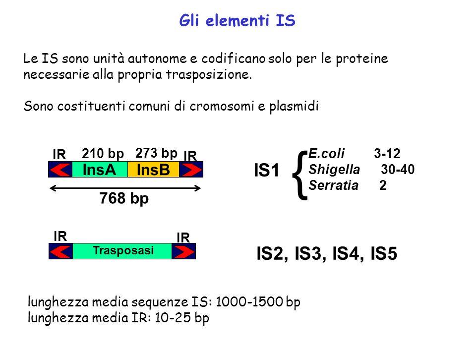 Gli elementi IS Le IS sono unità autonome e codificano solo per le proteine necessarie alla propria trasposizione. Sono costituenti comuni di cromosom
