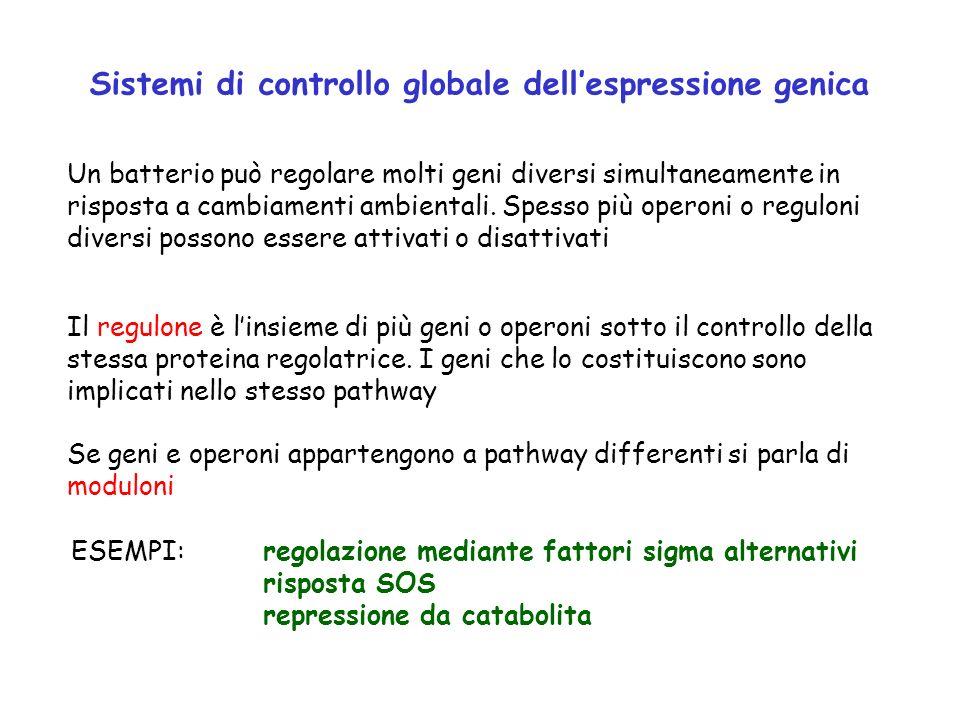 Sistemi di controllo globale dellespressione genica Un batterio può regolare molti geni diversi simultaneamente in risposta a cambiamenti ambientali.