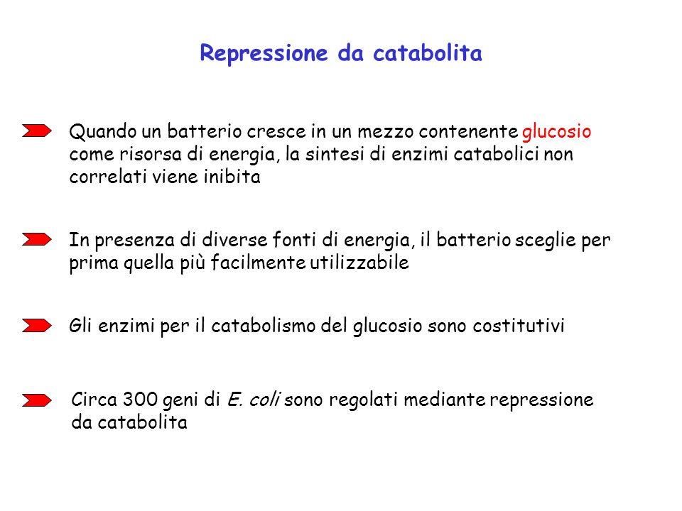 Repressione da catabolita Quando un batterio cresce in un mezzo contenente glucosio come risorsa di energia, la sintesi di enzimi catabolici non corre