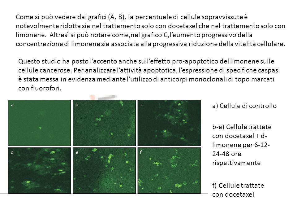 Come si può vedere dai grafici (A, B), la percentuale di cellule sopravvissute è notevolmente ridotta sia nel trattamento solo con docetaxel che nel t