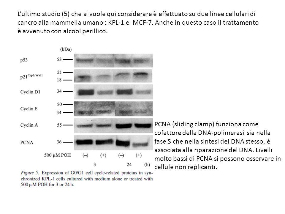 Lultimo studio (5) che si vuole qui considerare è effettuato su due linee cellulari di cancro alla mammella umano : KPL-1 e MCF-7. Anche in questo cas