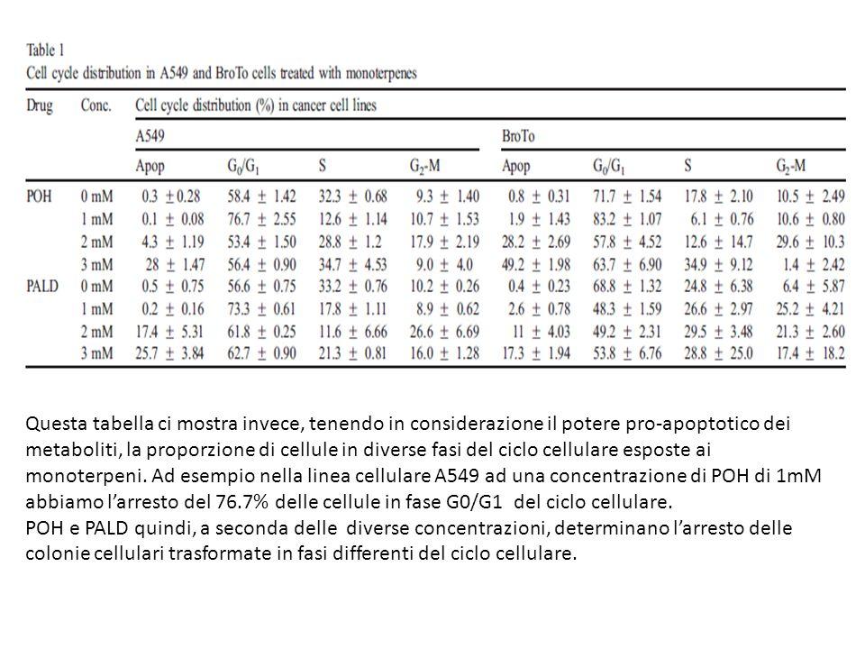 Questa tabella ci mostra invece, tenendo in considerazione il potere pro-apoptotico dei metaboliti, la proporzione di cellule in diverse fasi del cicl