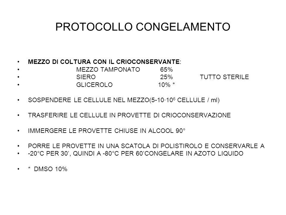 PROTOCOLLO CONGELAMENTO MEZZO DI COLTURA CON IL CRIOCONSERVANTE: MEZZO TAMPONATO 65% SIERO 25% TUTTO STERILE GLICEROLO 10% * SOSPENDERE LE CELLULE NEL MEZZO(5-10·10 6 CELLULE / ml) TRASFERIRE LE CELLULE IN PROVETTE DI CRIOCONSERVAZIONE IMMERGERE LE PROVETTE CHIUSE IN ALCOOL 90° PORRE LE PROVETTE IN UNA SCATOLA DI POLISTIROLO E CONSERVARLE A -20°C PER 30, QUINDI A -80°C PER 60CONGELARE IN AZOTO LIQUIDO * DMSO 10%