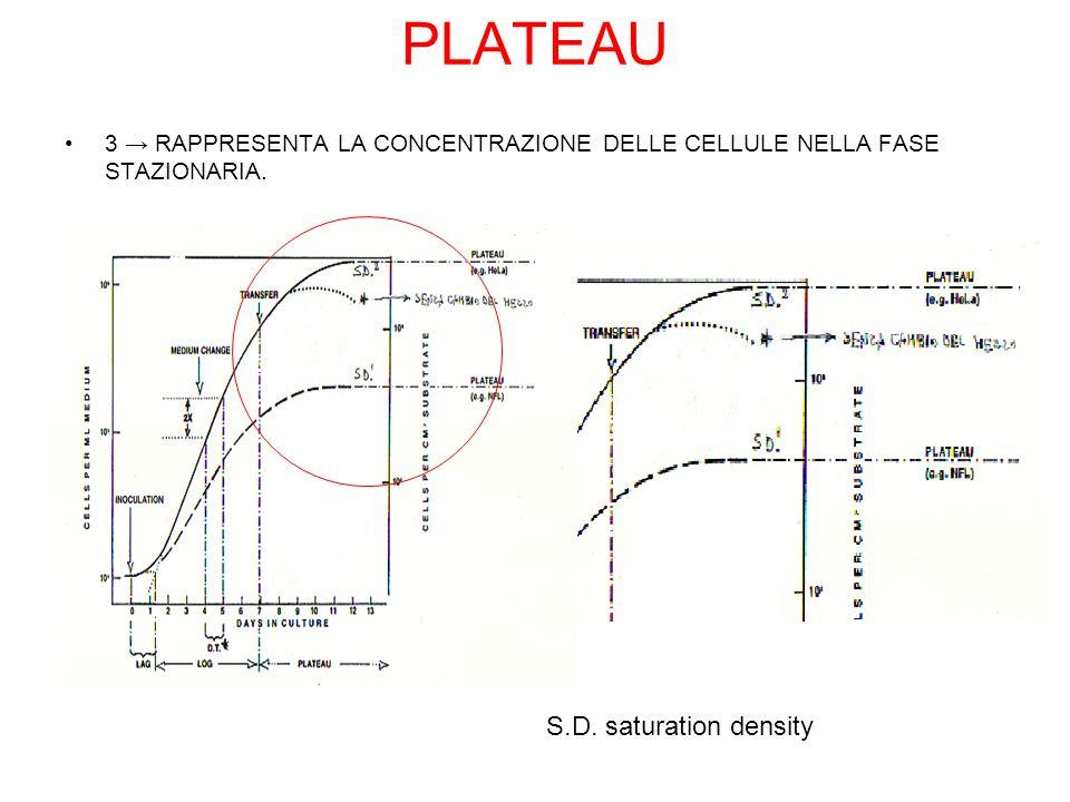 PLATEAU 3 RAPPRESENTA LA CONCENTRAZIONE DELLE CELLULE NELLA FASE STAZIONARIA.