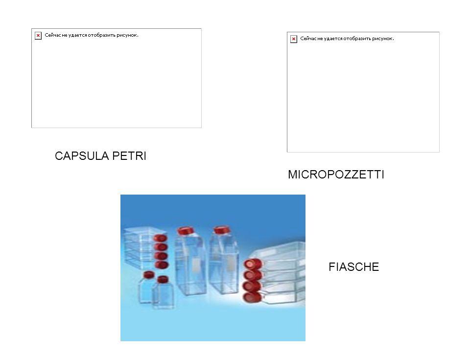 CAPSULA PETRI MICROPOZZETTI FIASCHE