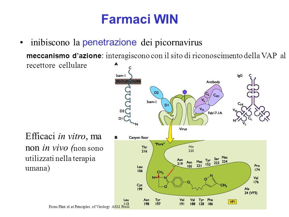Farmaci WIN inibiscono la penetrazione dei picornavirus Efficaci in vitro, ma non in vivo ( non sono utilizzati nella terapia umana) From Flint el at