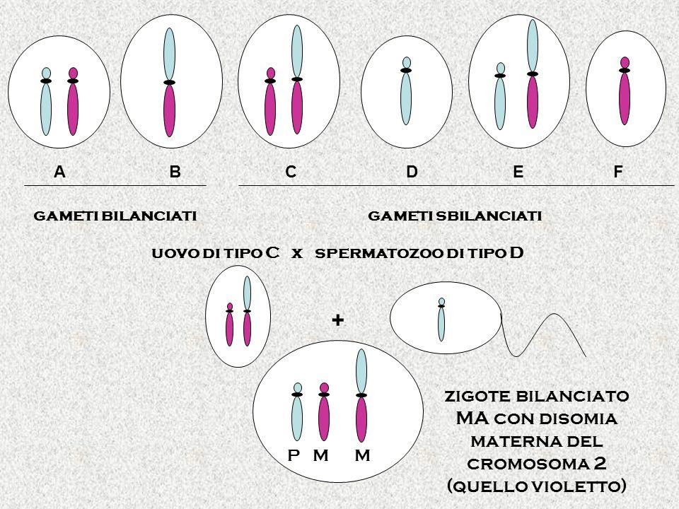gameti bilanciatigameti sbilanciati A B C D E F uovo di tipo C x spermatozoo di tipo D zigote bilanciato MA con disomia materna del cromosoma 2 (quello violetto) P M M +
