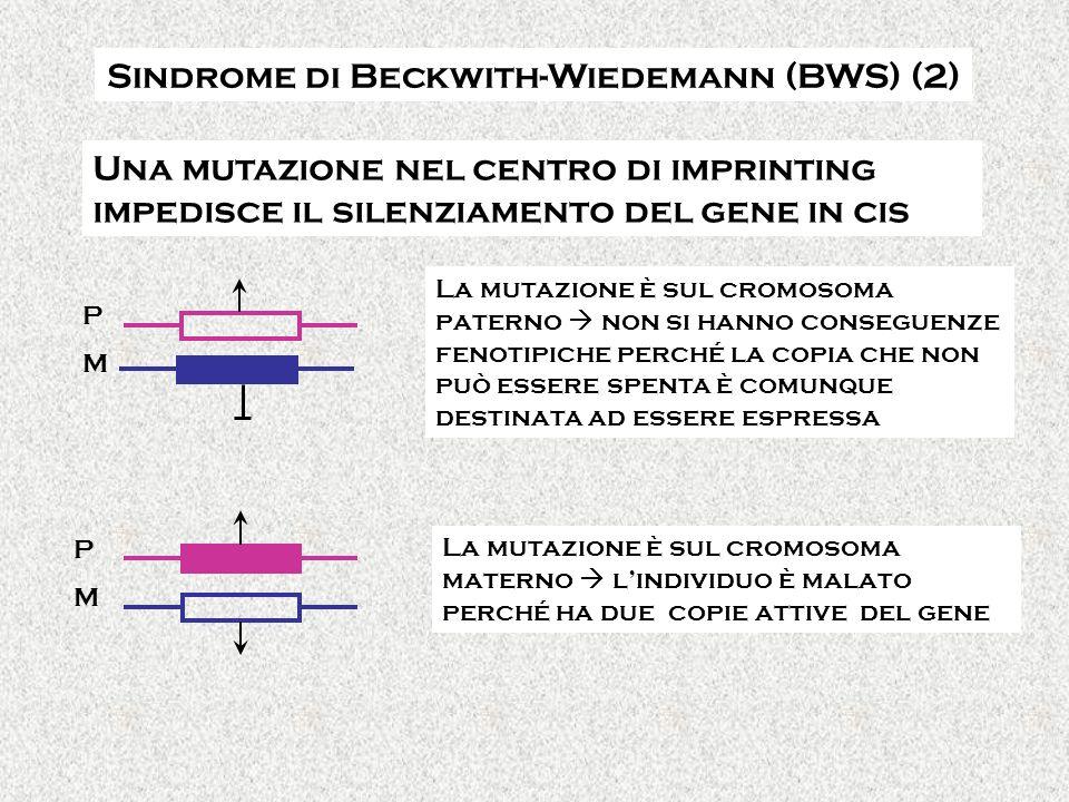 PMPM Sindrome di Beckwith-Wiedemann (BWS) (2) PMPM Una mutazione nel centro di imprinting impedisce il silenziamento del gene in cis La mutazione è sul cromosoma paterno non si hanno conseguenze fenotipiche perché la copia che non può essere spenta è comunque destinata ad essere espressa La mutazione è sul cromosoma materno lindividuo è malato perché ha due copie attive del gene