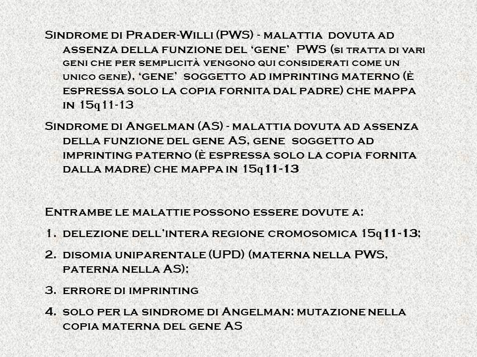 Sindrome di Prader-Willi (PWS) - malattia dovuta ad assenza della funzione del gene PWS ( si tratta di vari geni che per semplicità vengono qui considerati come un unico gene ), gene soggetto ad imprinting materno (è espressa solo la copia fornita dal padre) che mappa in 15 q 11-13 Sindrome di Angelman (AS) - malattia dovuta ad assenza della funzione del gene AS, gene soggetto ad imprinting paterno (è espressa solo la copia fornita dalla madre) che mappa in 15 q 11-13 Entrambe le malattie possono essere dovute a: 1.delezione dellintera regione cromosomica 15 q 11-13; 2.disomia uniparentale (UPD) (materna nella PWS, paterna nella AS); 3.errore di imprinting 4.solo per la sindrome di Angelman: mutazione nella copia materna del gene AS