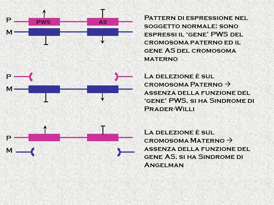 PWSAS PMPM Pattern di espressione nel soggetto normale: sono espressi il gene PWS del cromosoma paterno ed il gene AS del cromosoma materno PMPM PMPM La delezione è sul cromosoma Paterno assenza della funzione del gene PWS, si ha Sindrome di Prader-Willi La delezione è sul cromosoma Materno assenza della funzione del gene AS, si ha Sindrome di Angelman