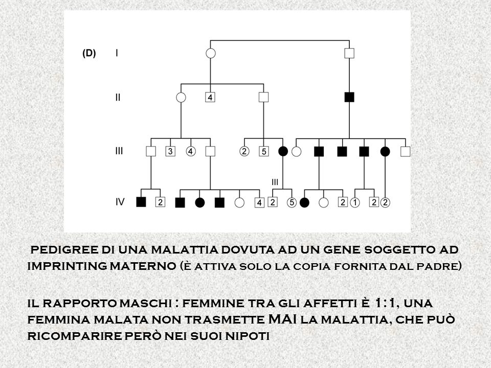 pedigree di una malattia dovuta ad un gene soggetto ad imprinting materno (è attiva solo la copia fornita dal padre) il rapporto maschi : femmine tra gli affetti è 1:1, una femmina malata non trasmette MAI la malattia, che può ricomparire però nei suoi nipoti