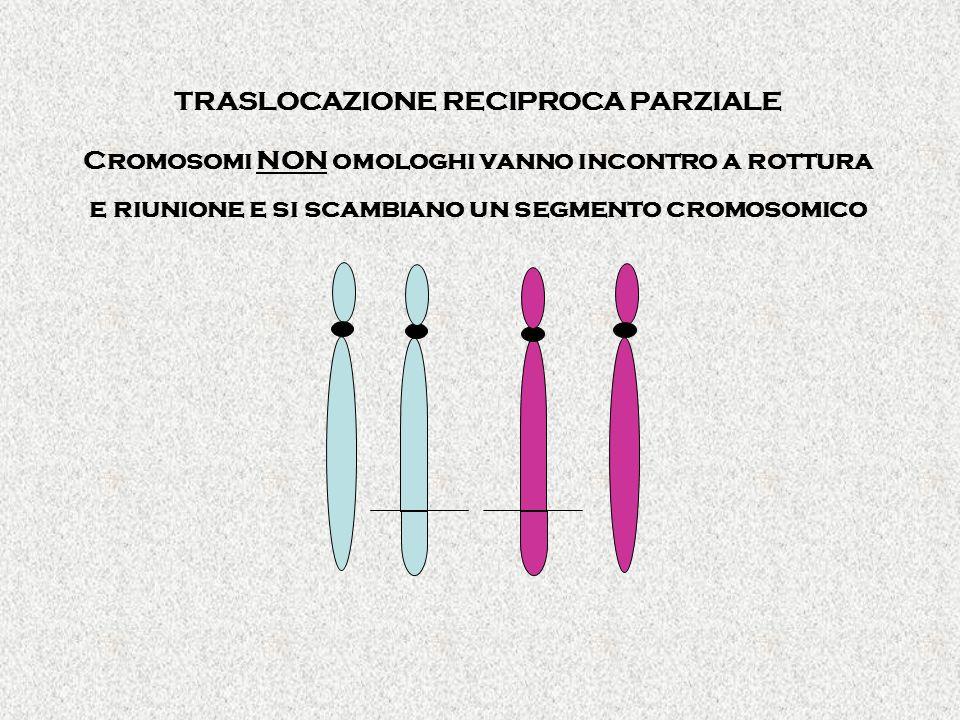 TRASLOCAZIONE RECIPROCA PARZIALE Cromosomi NON omologhi vanno incontro a rottura e riunione e si scambiano un segmento cromosomico