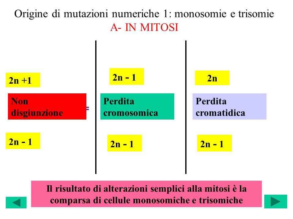 Origine di mutazioni numeriche 1: monosomie e trisomie A- IN MITOSI 2n +1 2n - 1 2n Non disgiunzione Perdita cromosomica Perdita cromatidica Il risult
