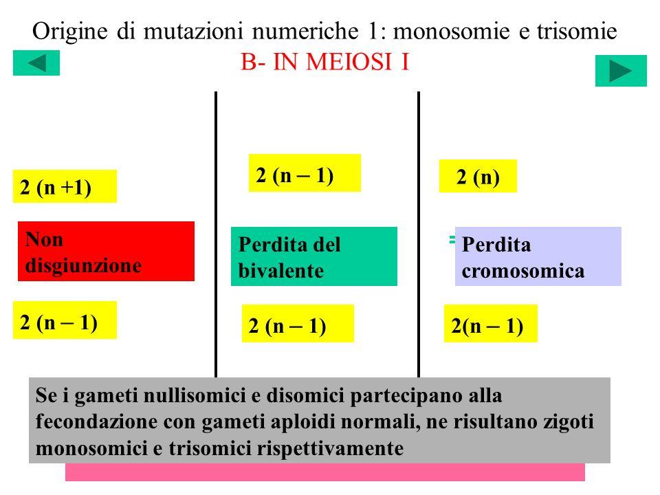 Origine di mutazioni numeriche 1: monosomie e trisomie B- IN MEIOSI I 2 (n +1) 2 (n – 1) 2 (n) Non disgiunzione Perdita del bivalente Perdita cromosom