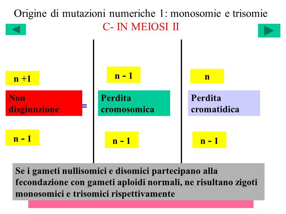 Origine di mutazioni numeriche 1: monosomie e trisomie C- IN MEIOSI II n +1 n - 1 n Non disgiunzione Perdita cromosomica Perdita cromatidica Il risult