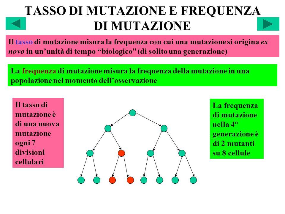 TASSO DI MUTAZIONE E FREQUENZA DI MUTAZIONE Il tasso di mutazione misura la frequenza con cui una mutazione si origina ex novo in ununità di tempo bio