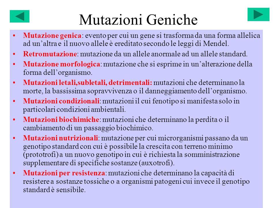 Mutazioni Geniche Mutazione genica: evento per cui un gene si trasforma da una forma allelica ad unaltra e il nuovo allele è ereditato secondo le legg