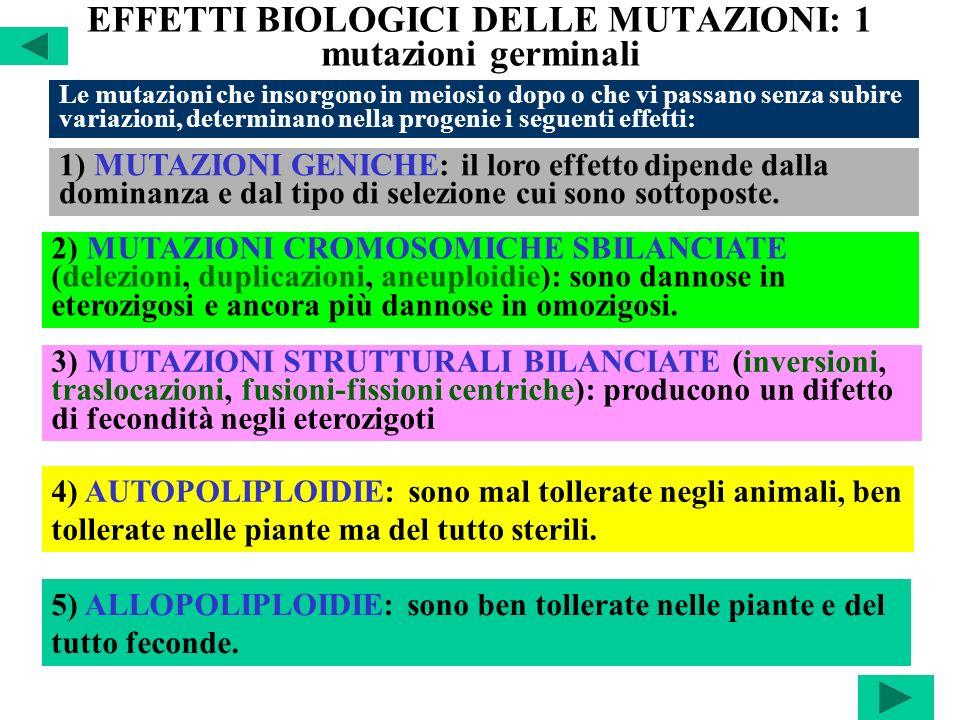 EFFETTI BIOLOGICI DELLE MUTAZIONI: 1 mutazioni germinali Le mutazioni che insorgono in meiosi o dopo o che vi passano senza subire variazioni, determi