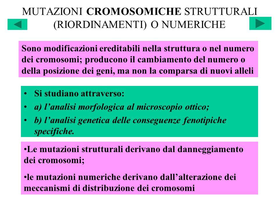 MUTAZIONI CROMOSOMICHE STRUTTURALI (RIORDINAMENTI) O NUMERICHE Si studiano attraverso: a) lanalisi morfologica al microscopio ottico; b) lanalisi gene