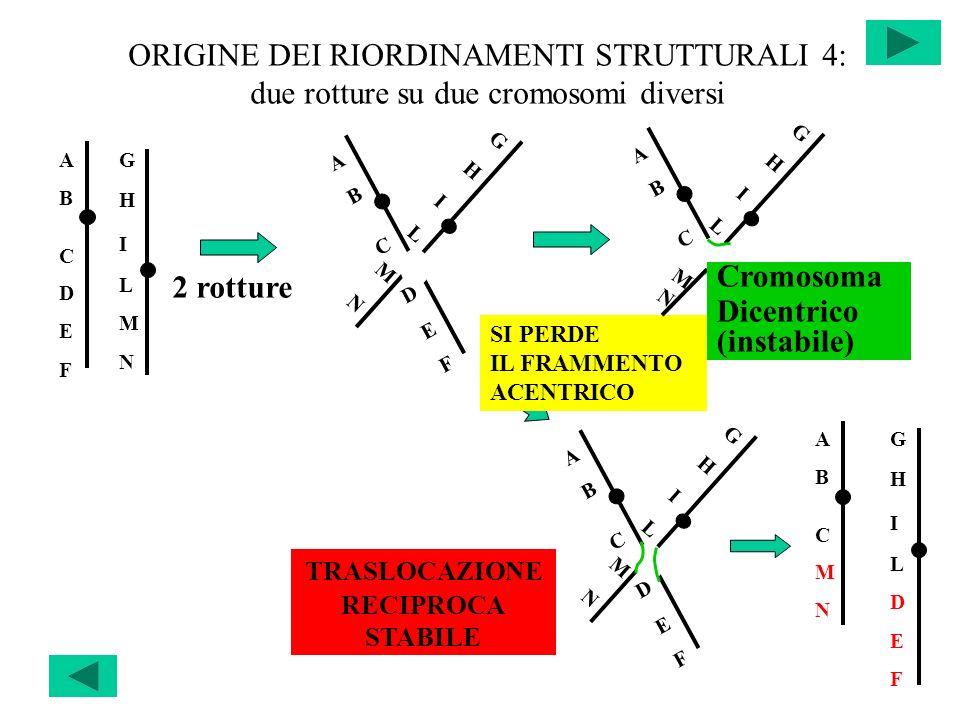 ORIGINE DEI RIORDINAMENTI STRUTTURALI 4: due rotture su due cromosomi diversi ABCDEFABCDEF GHILMNGHILMN ABCDEFABCDEF GHILMNGHILMN ABCABC GHILGHIL ABCD