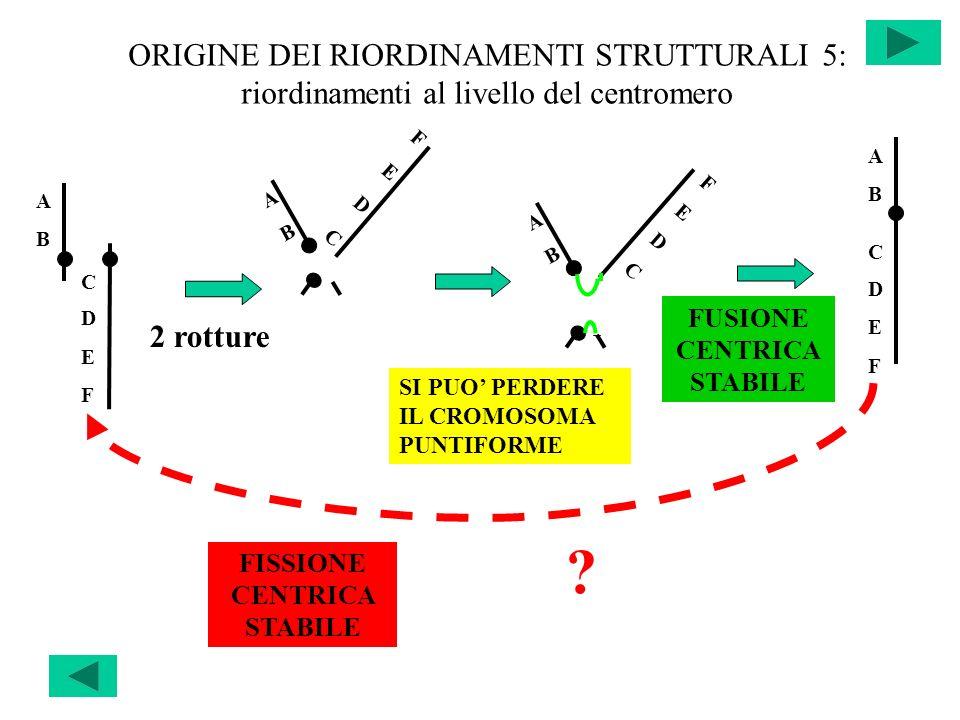 ORIGINE DEI RIORDINAMENTI STRUTTURALI 5: riordinamenti al livello del centromero 2 rotture SI PUO PERDERE IL CROMOSOMA PUNTIFORME FISSIONE CENTRICA ST