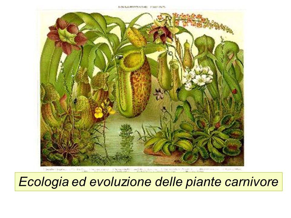 Le piante carnivore attirano, intrappolano e consumano protozoi ed animali, specialmente insetti ed altri artropodi, per ricavarne nutrienti essenziali per il loro sviluppo.