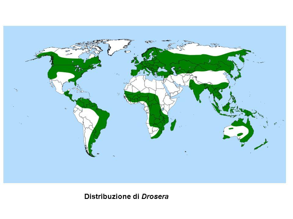 Distribuzione di Drosera