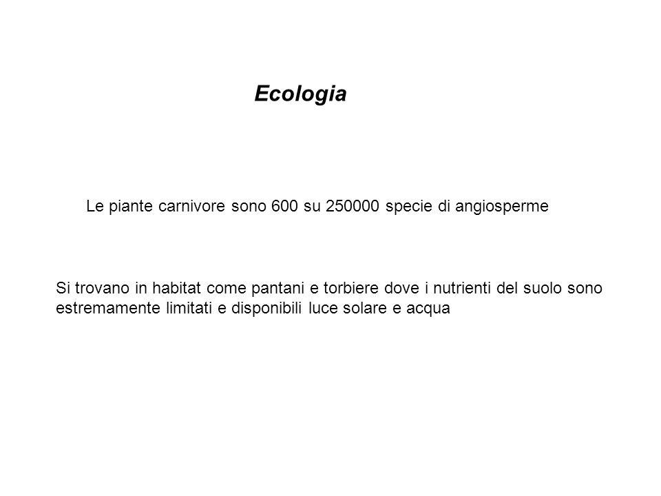 Le piante carnivore sono 600 su 250000 specie di angiosperme Si trovano in habitat come pantani e torbiere dove i nutrienti del suolo sono estremamente limitati e disponibili luce solare e acqua Ecologia
