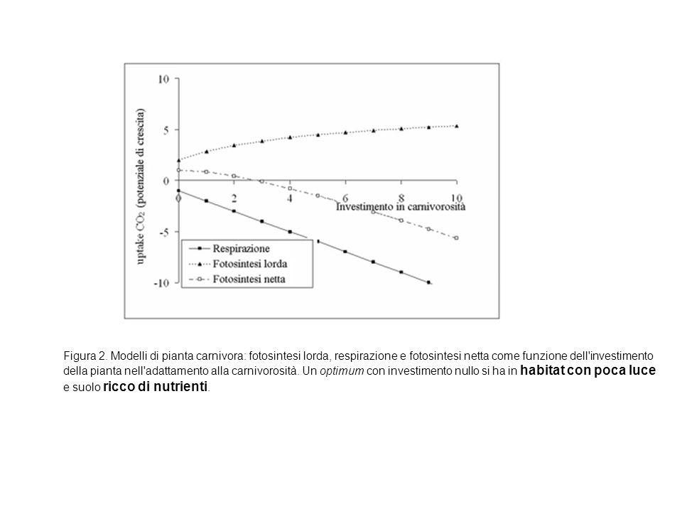 Figura 2. Modelli di pianta carnivora: fotosintesi lorda, respirazione e fotosintesi netta come funzione dell'investimento della pianta nell'adattamen