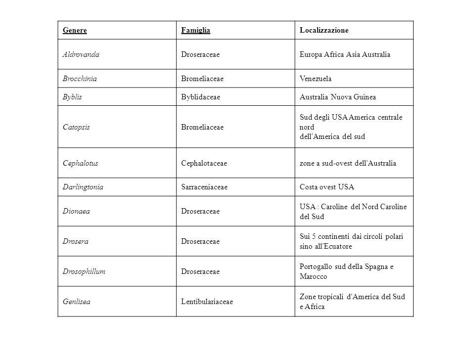 Si presume che tutte le varie tipologie di trappole siano modificazioni di una simile struttura di base: foglie con peli.