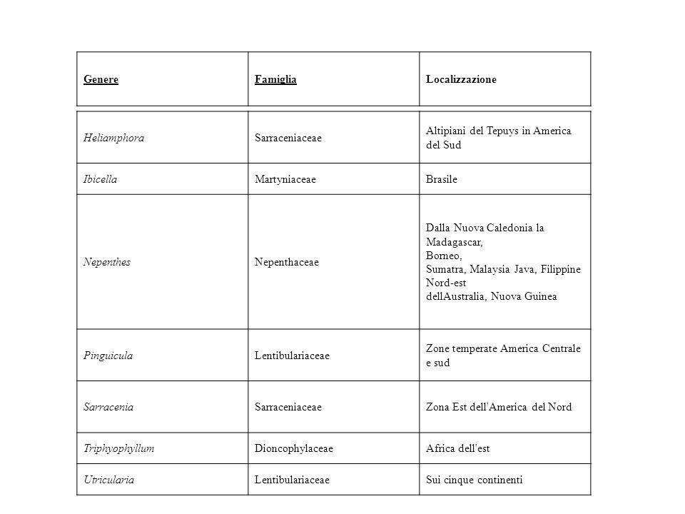 HeliamphoraSarraceniaceae Altipiani del Tepuys in America del Sud IbicellaMartyniaceaeBrasile NepenthesNepenthaceae Dalla Nuova Caledonia la Madagasca