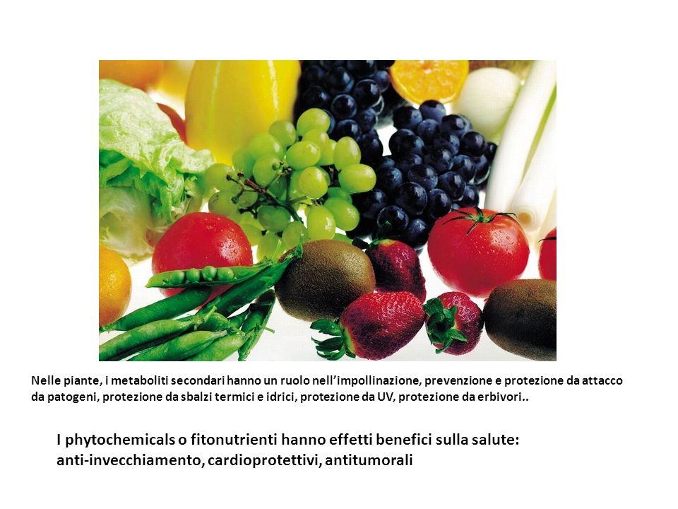 Nelle piante, i metaboliti secondari hanno un ruolo nellimpollinazione, prevenzione e protezione da attacco da patogeni, protezione da sbalzi termici