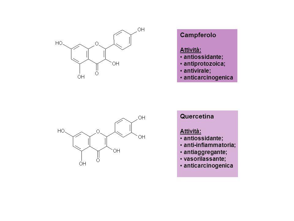 Campferolo Attività: antiossidante; antiprotozoica; antivirale; anticarcinogenica Quercetina Attività: antiossidante; anti-infiammatoria; antiaggregan