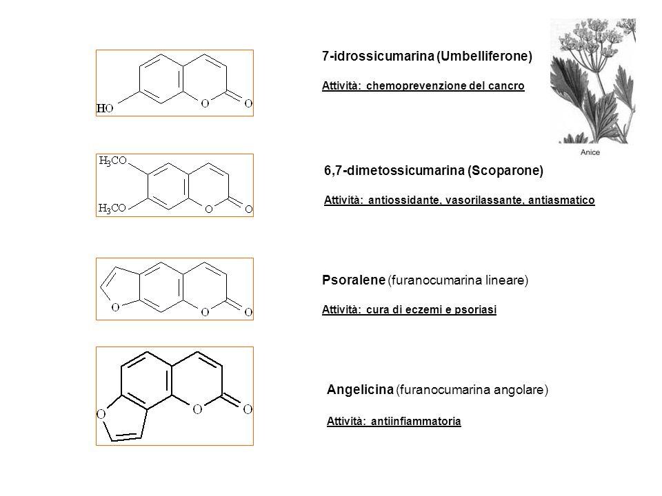 7-idrossicumarina (Umbelliferone) Attività: chemoprevenzione del cancro 6,7-dimetossicumarina (Scoparone) Attività: antiossidante, vasorilassante, ant