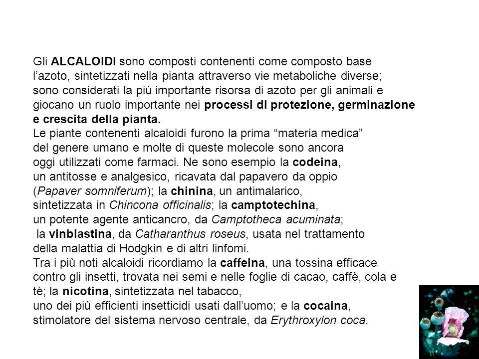 Gli ALCALOIDI sono composti contenenti come composto base lazoto, sintetizzati nella pianta attraverso vie metaboliche diverse; sono considerati la pi