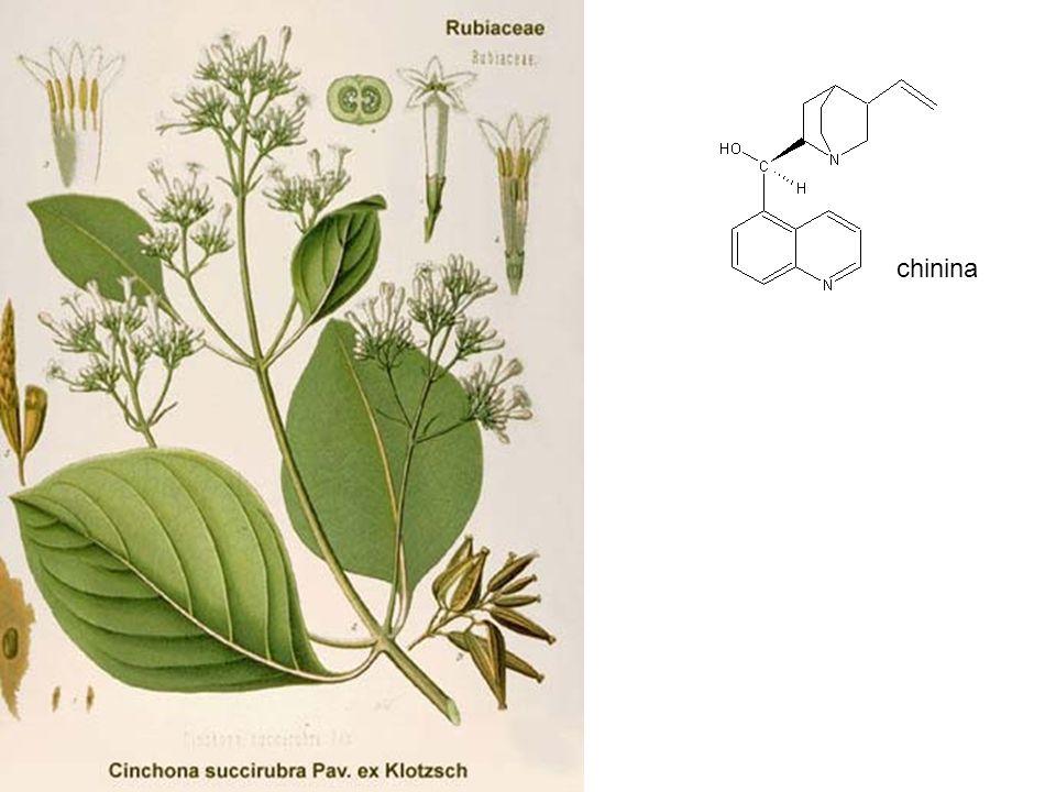 chinina