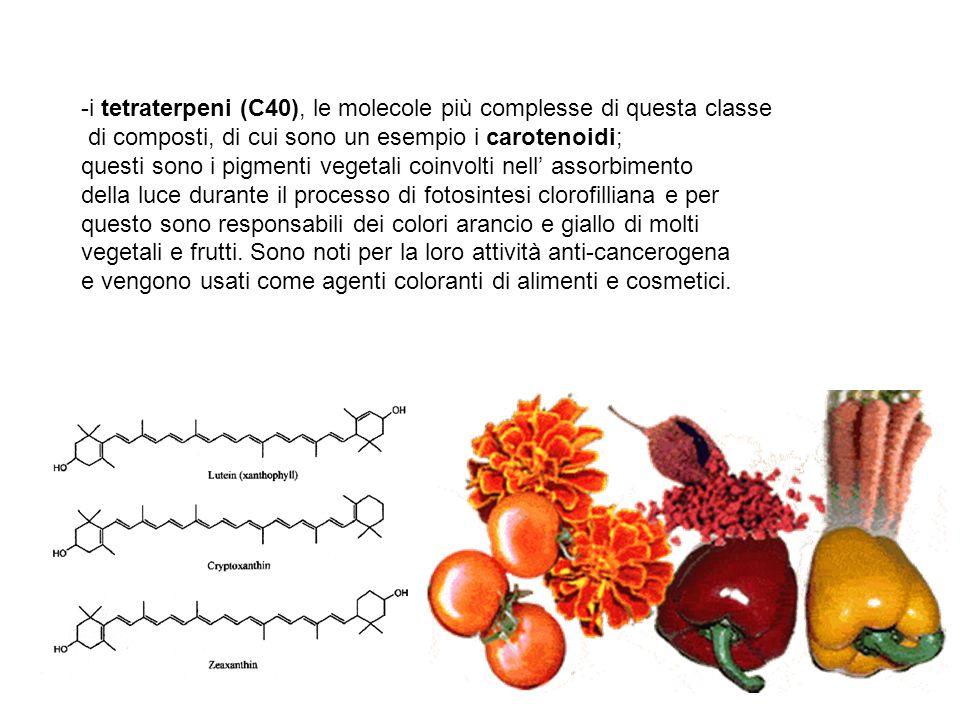 -i tetraterpeni (C40), le molecole più complesse di questa classe di composti, di cui sono un esempio i carotenoidi; questi sono i pigmenti vegetali c