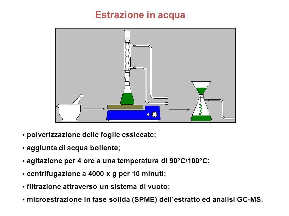 Estrazione in acqua polverizzazione delle foglie essiccate; aggiunta di acqua bollente; agitazione per 4 ore a una temperatura di 90°C/100°C; centrifu