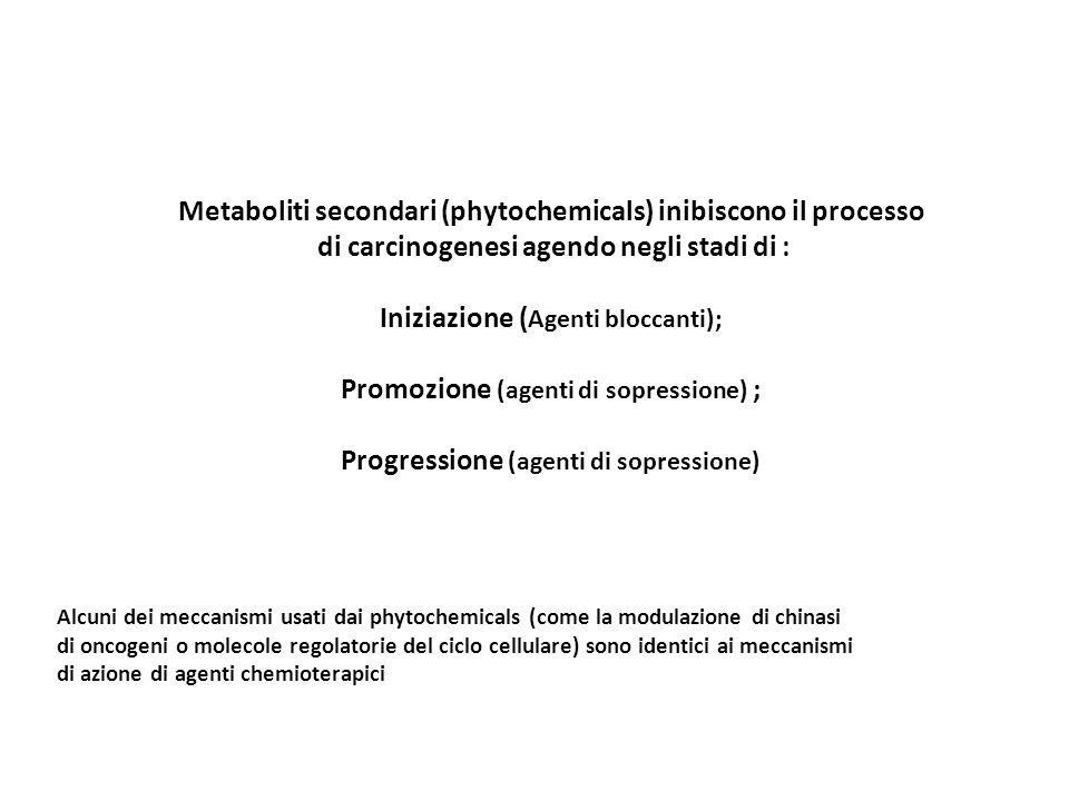 Metaboliti secondari (phytochemicals) inibiscono il processo di carcinogenesi agendo negli stadi di : Iniziazione ( Agenti bloccanti); Promozione (age