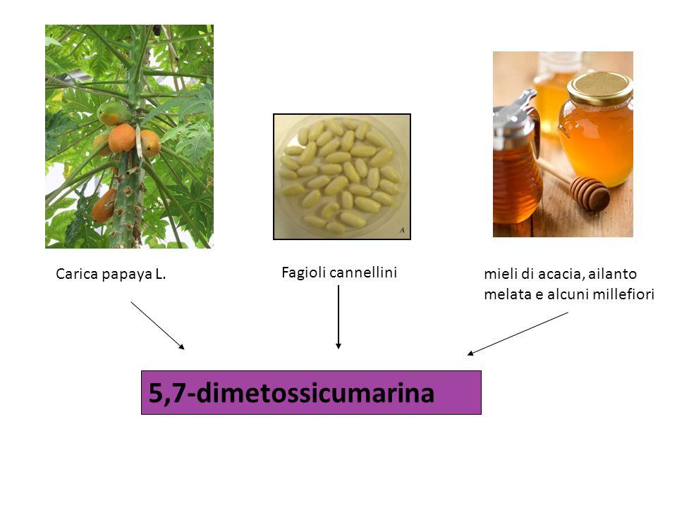 5,7-dimetossicumarina Carica papaya L. Fagioli cannellini mieli di acacia, ailanto melata e alcuni millefiori