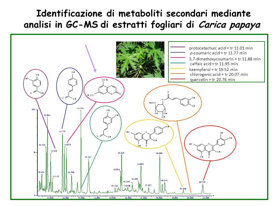 p-coumaric acid = tr 11.77 min protocatechuic acid = tr 11.01 min 5,7-dimethoxycoumarin = tr 11.88 min caffeic acid = tr 11.95 min kaempferol = tr 19.